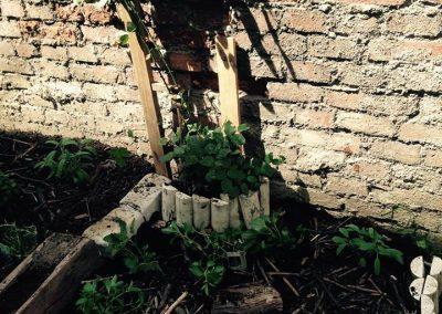 Ropotarnica - mestni vrt - zid