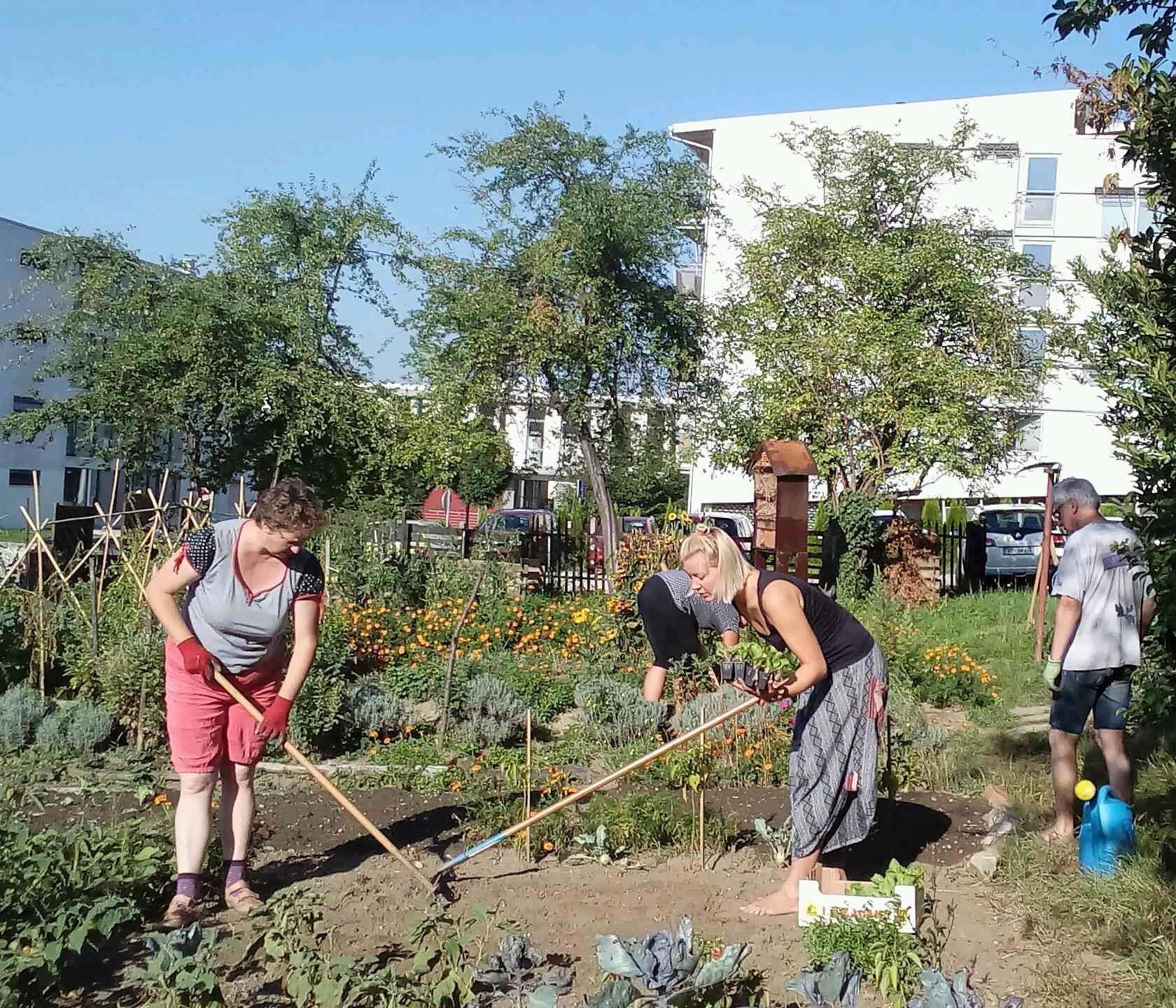 Ropotarnica - mestni vrt - okopavanje