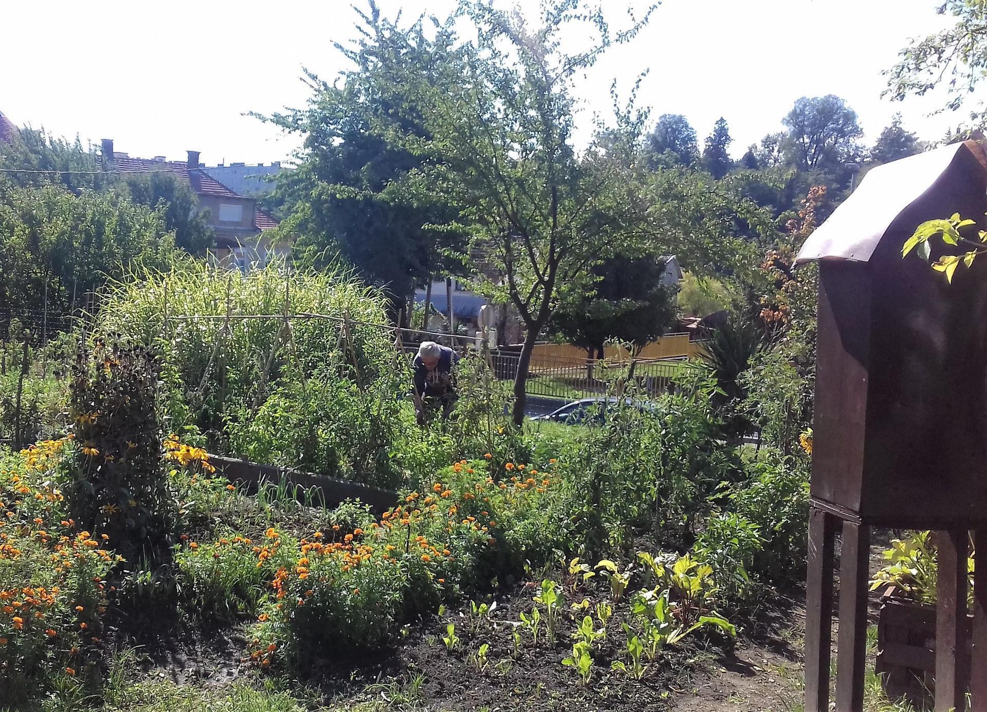 Ropotarnica - mestni vrt - bujno
