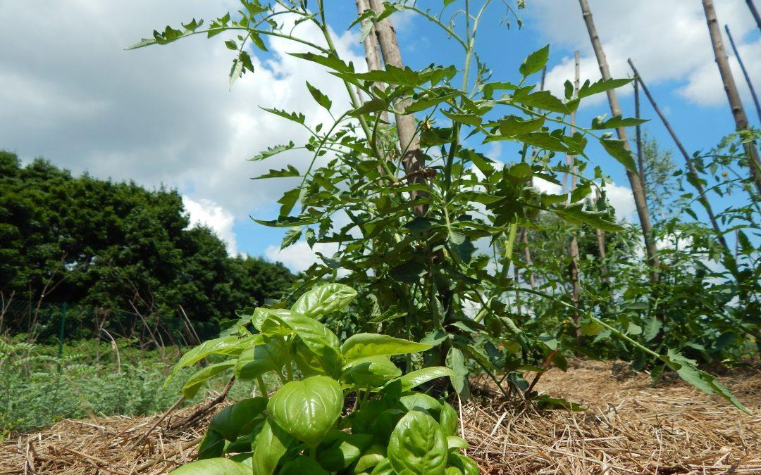 Delavnica Vrta obilja!