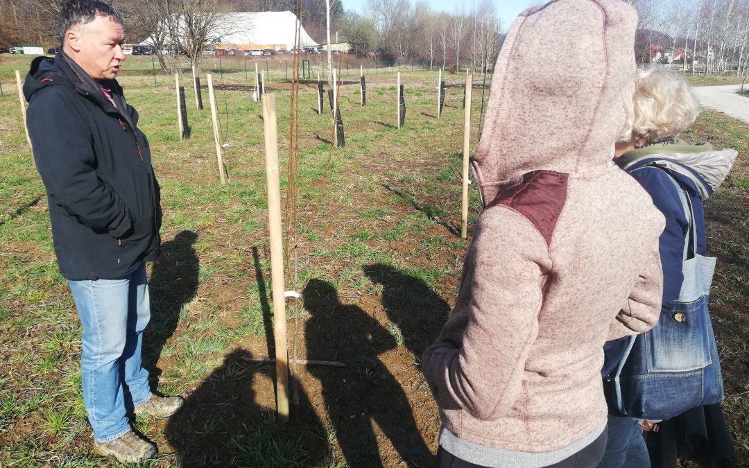 Delavnica rezi sadnega drevja na našem vrtu