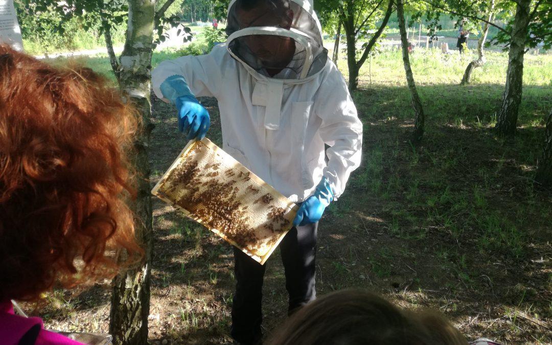 Čebele – kaj se skriva v čebelnjaku? Zdaj vemo!