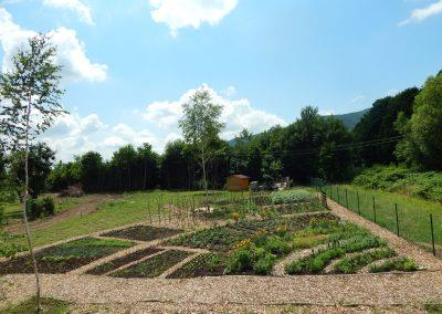 Social-integrational garden growing (3)